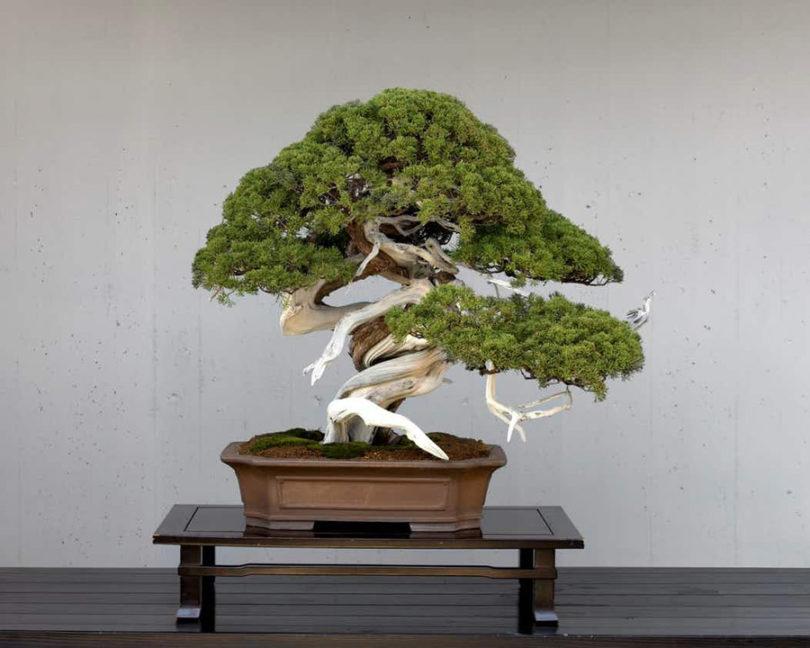 Bonsai na decoração