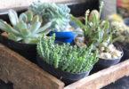 Plantas para ambiente externo